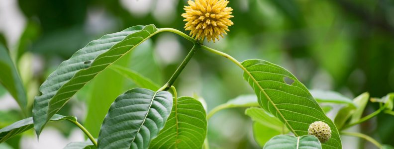 Required Additional Time? Find Out These Tricks To Obtain Rid Of Acquire Kratom
